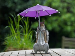squirrel-umbrella-rain-squirrelisimo-max-ellis-2